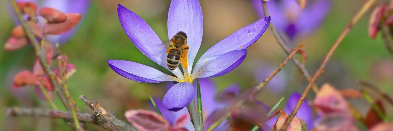 Plant Natives for Pollinators